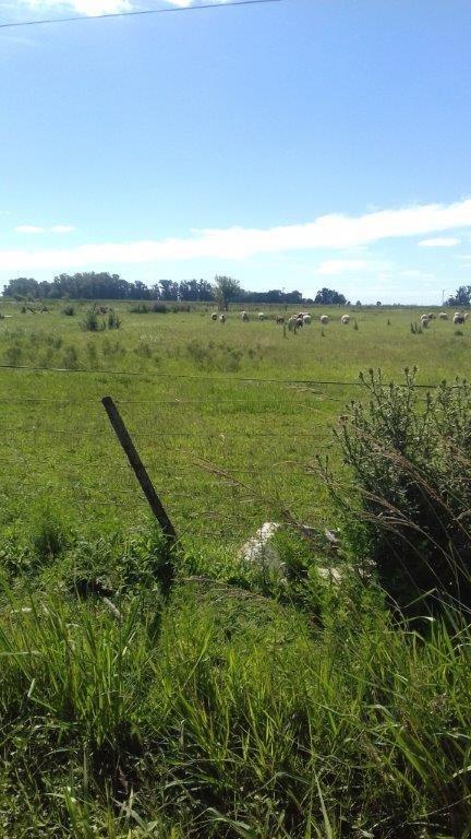 emprendimiento 4 hectáreas agrícolas-ganaderas