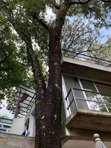 en venta casa minimalista en el bosque