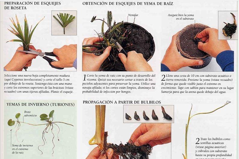 Atractivo Hoja Teorema Del Binomio Colección de Imágenes - hojas de ...