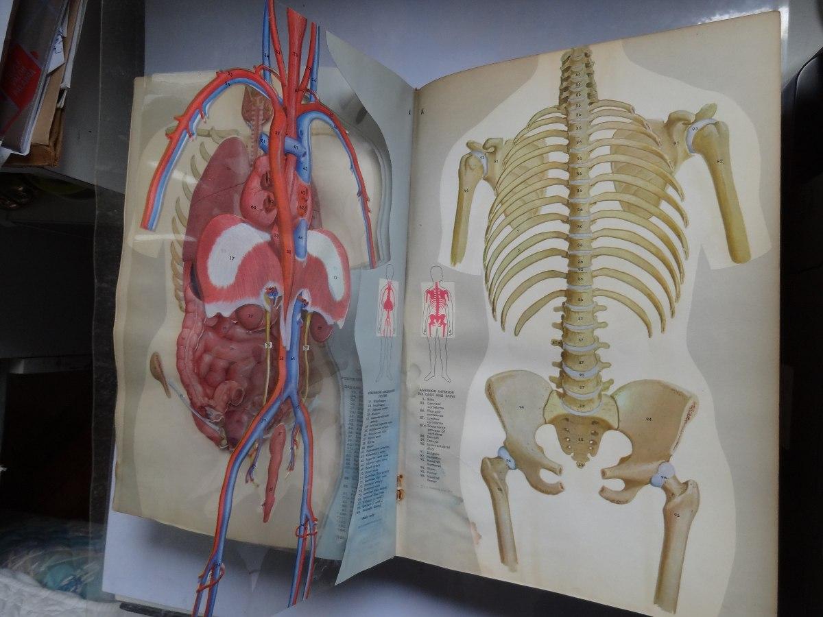 Enciclopedia Anatomía Fishbein C/dibujos En Tranparencias - $ 900,00 ...