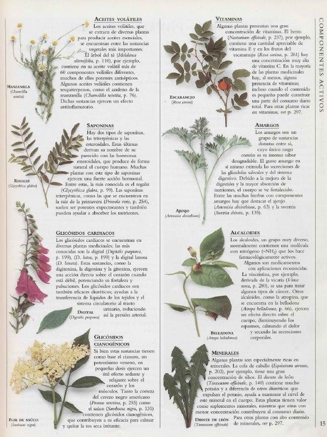 Enciclopedia de plantas medicinales en mercado for Mezclas de plantas medicinales