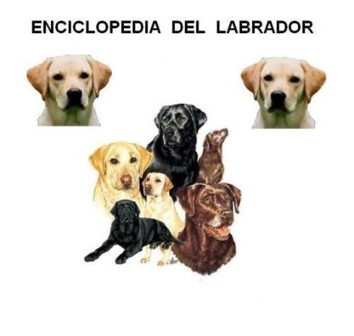 enciclopedia del labrador, adiestramiento canino, cachorros