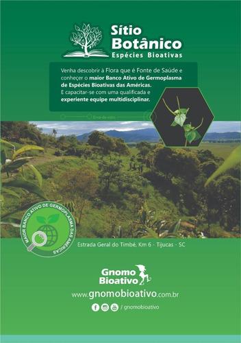 enciclopédia plantas bioativas livro 1 - erva-de-vidro