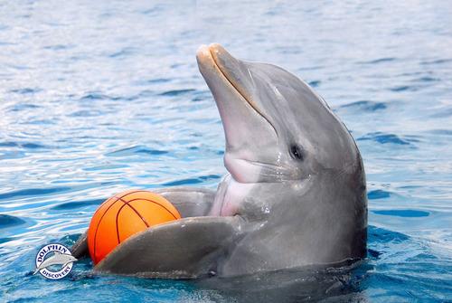 encuentro con delfines en pareja d.f.