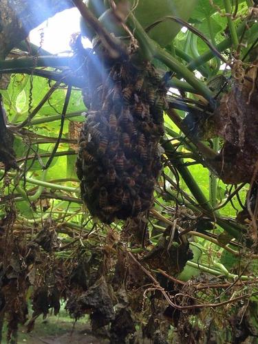 enjambres, abejas, colmenas retiramos