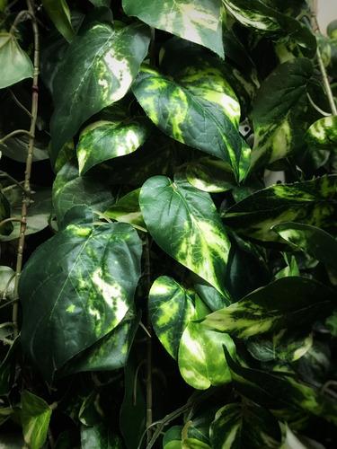 enredadera artificial 2 mts hiedra follaje trepadora planta