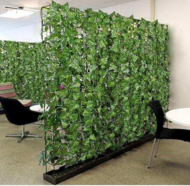 Enredaderas y plantas para decorar muros y paredes omm for Plantas de interior para colgar