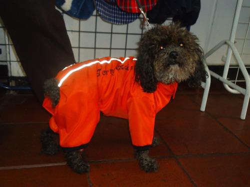 enterizo impermeable para perro mediano