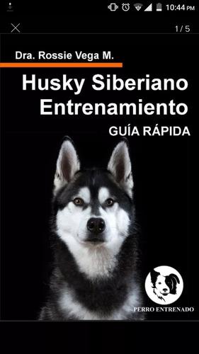 entrena a tu husky es muy fácil y rápido guía dijital