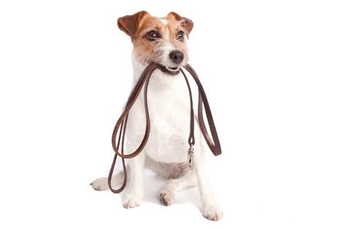 entrenamiento canino a domicilio