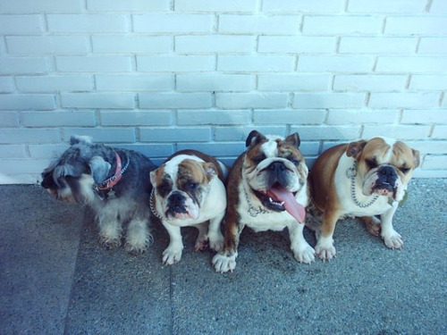 entrenamiento canino danko instagram @dankok9