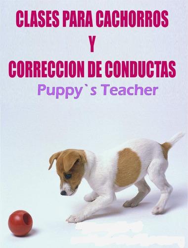 entrenamiento de perros a domicilio y videollamadas caracas