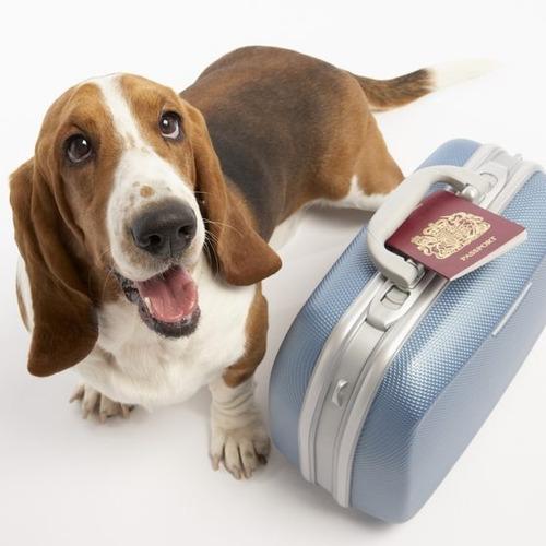 envio aereo para mascotas.servicio de traslado y trámites