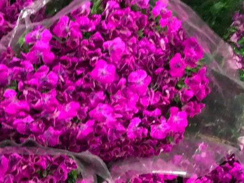 envios de flores naturales por mayor