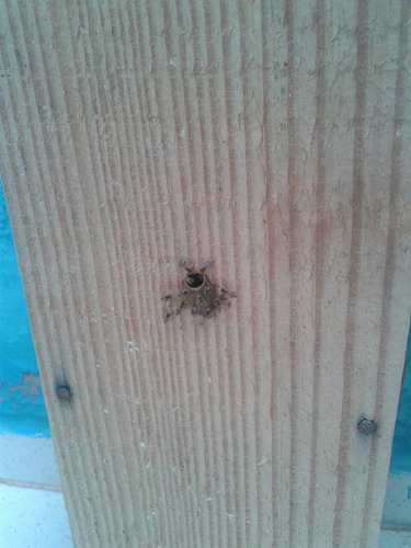 enxame de abelhas jatai  mais caixa vertical