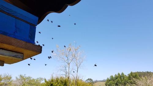 enxame de abelhas mandaçaia mqa - osasco/sp