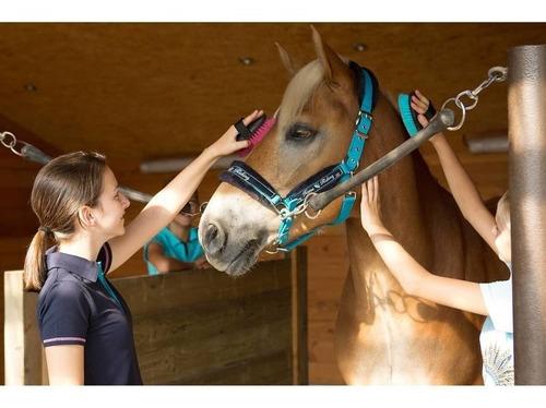 equitación para rienda