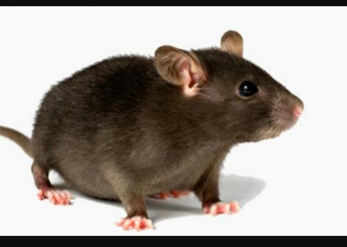 erradicador de ratas y murciélagos envío gratis! oferta!
