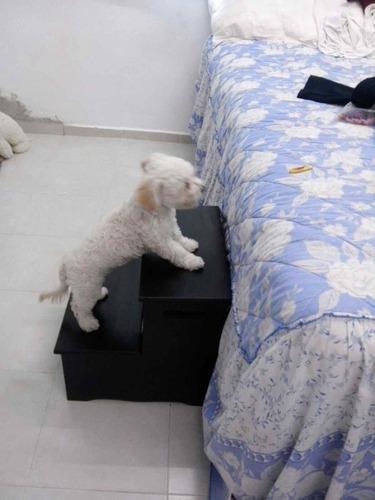 escalera para mascotas de madera.