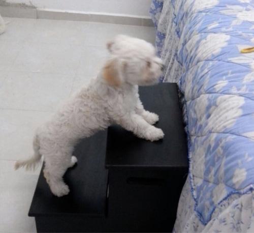 escaleras perros mascotas