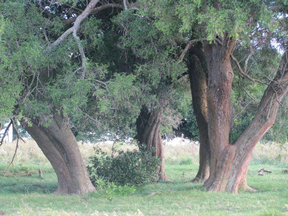 escondida en la paz de las serranías, la naturaleza a pleno.