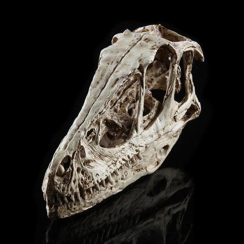 esculturas de cabeza cráneo de dinosaurio fósil modelo de