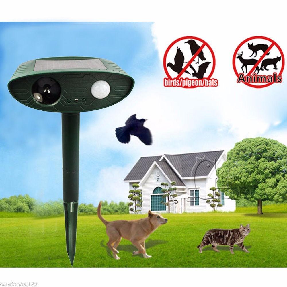 Espanta gatos perros conejos y roedores en for Como ahuyentar gatos del jardin