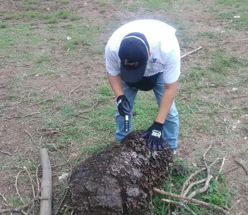 especialista de termitas, trabajamos con carcomas algavaros
