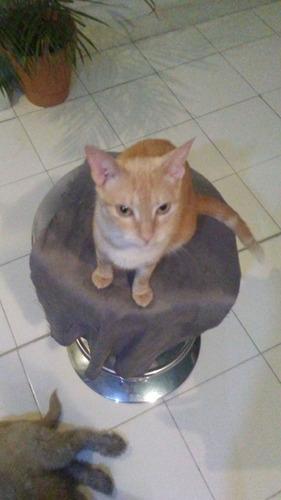 espiguita busca hogar gatita en adopcion