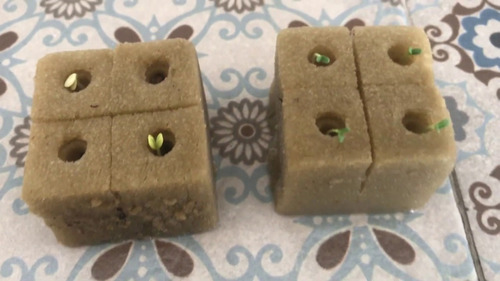 espuma fenolica peatfoam germinación 160 cubos 3.1x2.5x3.5