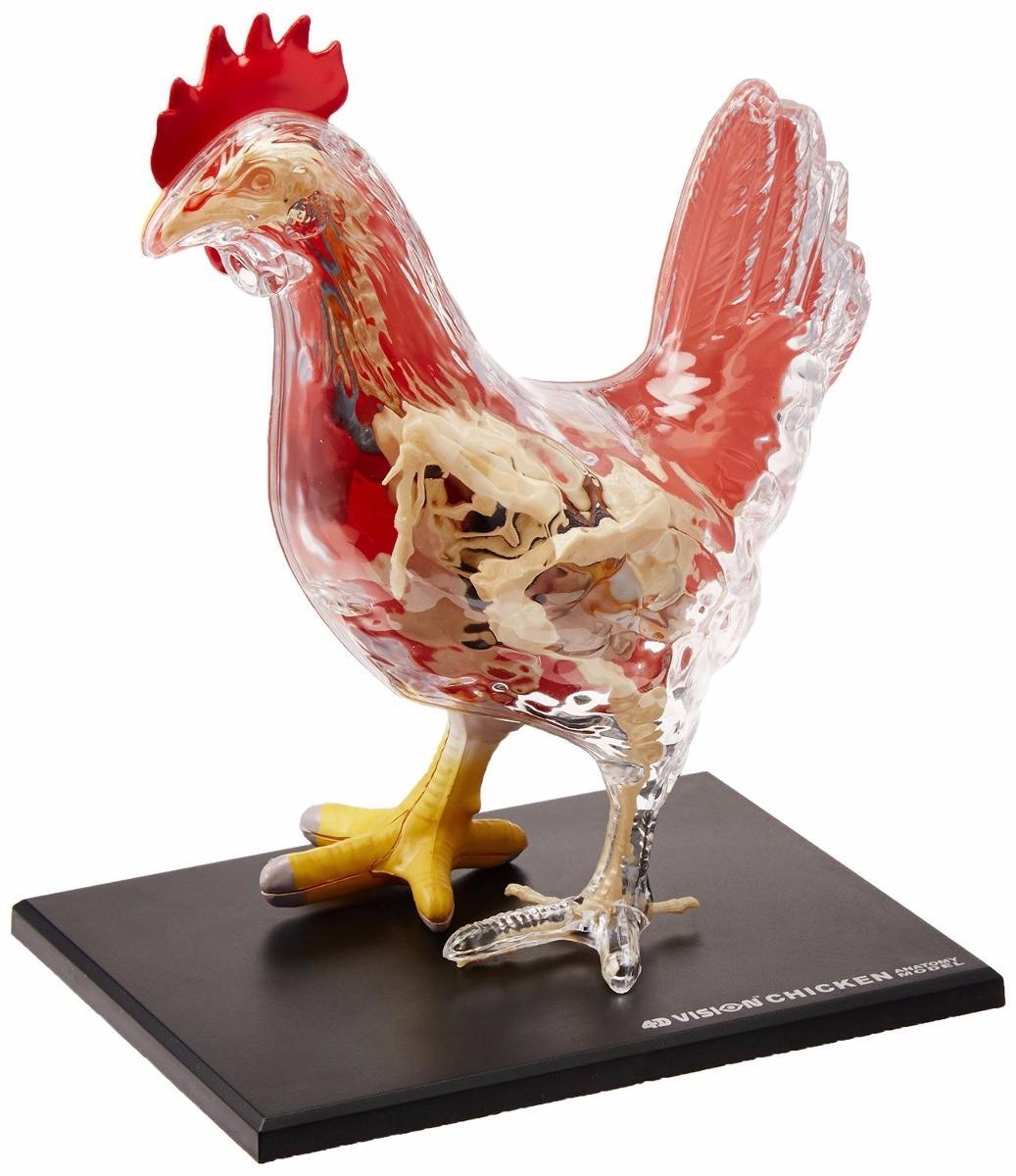 Esqueleto Anatomía De Pollo Realista 4d - $ 1,750.00 en Mercado Libre