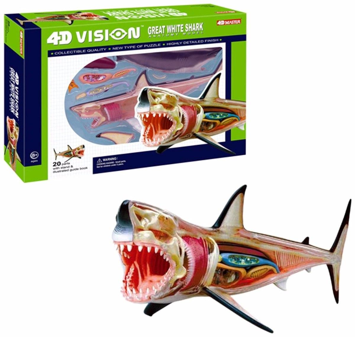 Contemporáneo Anatomía De Un Tiburón Patrón - Anatomía de Las ...