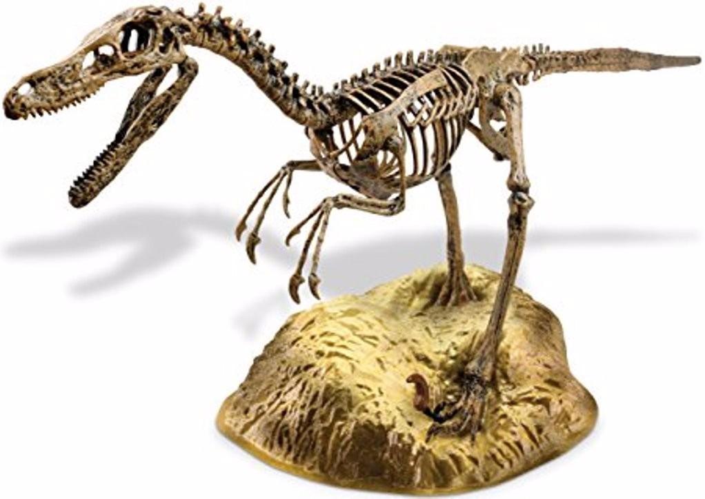 Esqueleto De Dinosaurio Velociraptor Para Armar 24 Piezas - $ 479,00 ...