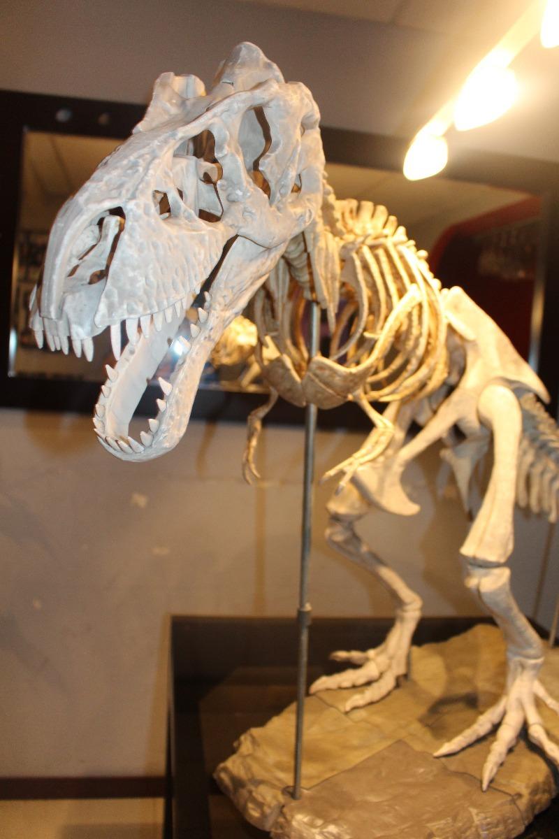 Esqueleto Dinosaurio Tiranosaurio Rex - S/ 450,00 en Mercado Libre
