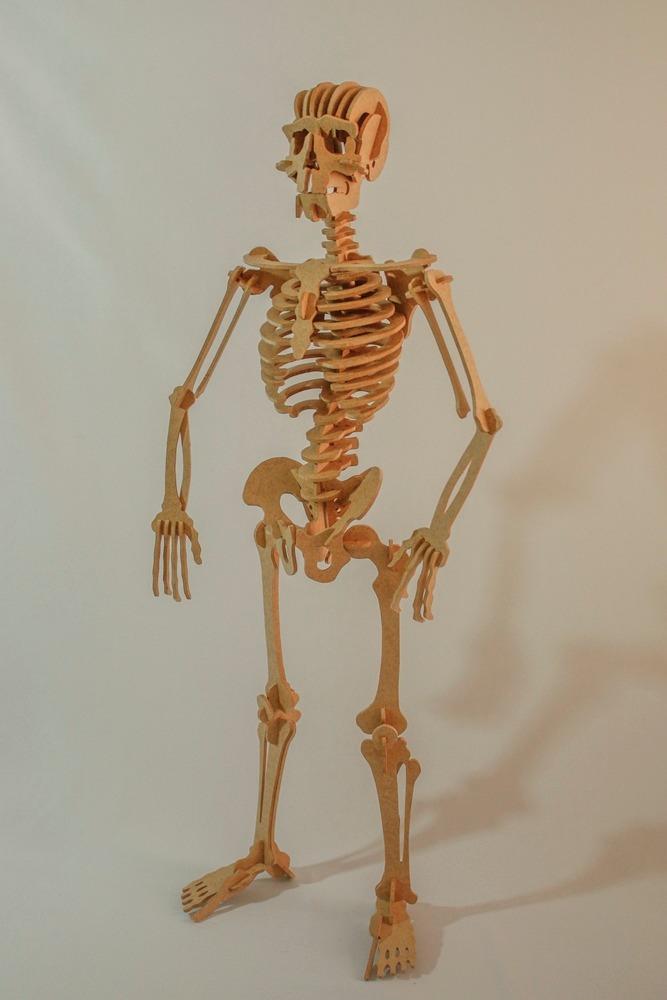 Fantástico Foto Esqueleto Composición - Anatomía de Las Imágenesdel ...