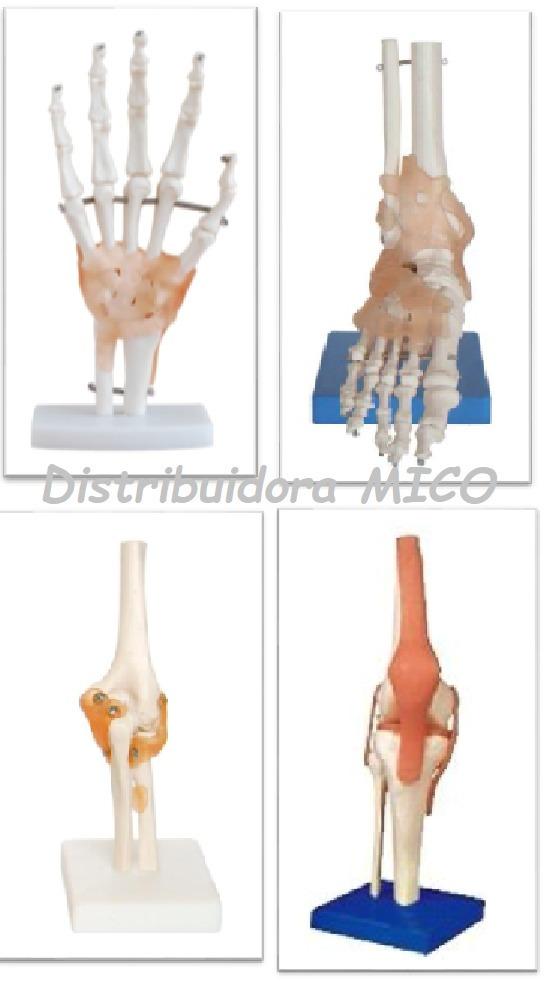 Esqueleto Humano Maqueta De Anatonia Biologia - S/ 420,00 en Mercado ...