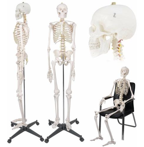 esqueleto humano modelo anatomico tamaño adulto 1.8 metros