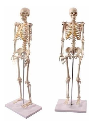 esqueleto humano modelo detallado tamaño 85cm