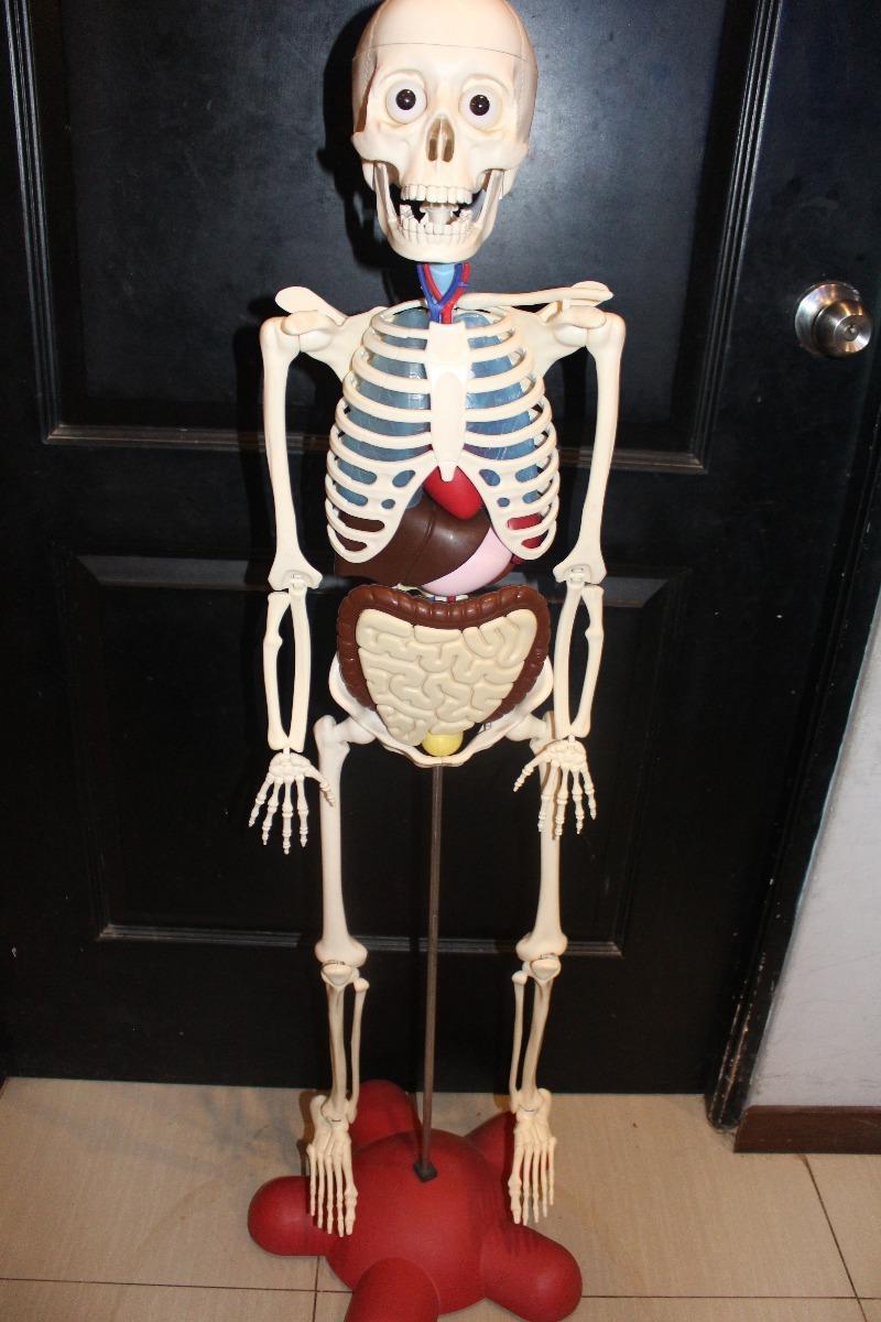 Esqueleto Y Organos Del Cuerpo Humano Colección El Comercio - S/ 450 ...