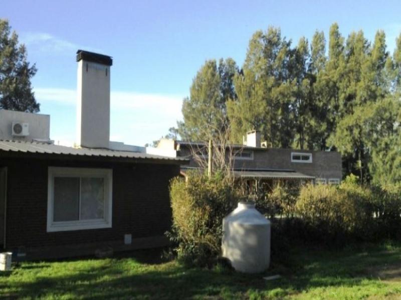 establecimiento para producción de kiwi. ruta 226. el coyunco.
