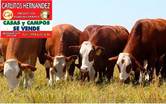 estancia campo ganadero arrendar cerro largo 2.200 ha uss