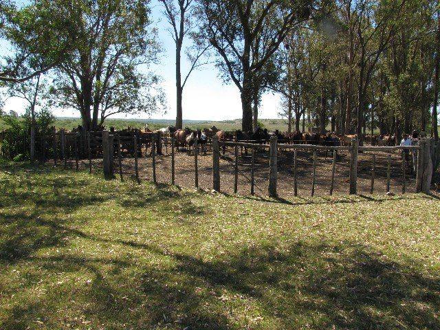 estancia de 3350 hectareas, agrícola - ganadero
