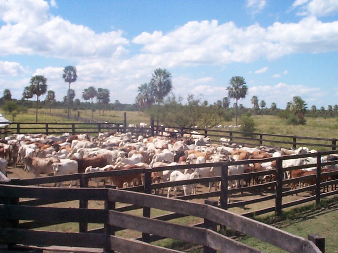 estancia en paraguay (villa hayes) a 5o km de asuncion