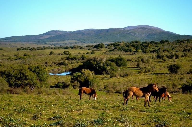 estancia guazuvirá, campo, la nativa, sierras de las ánimas