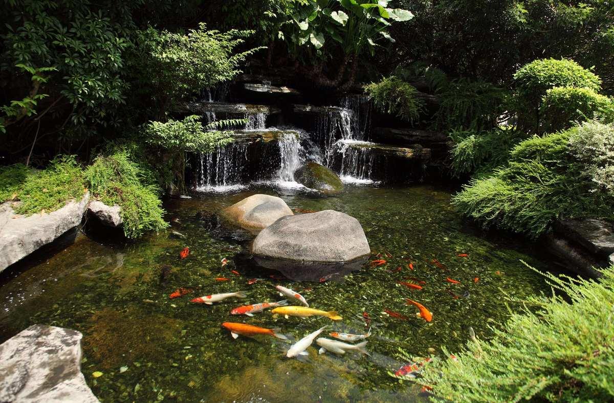 Estanques de agua estilo japon s para tu jard n 120 for Estanques para agua precios