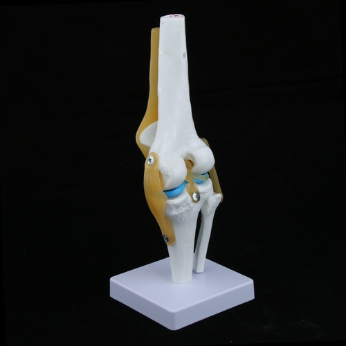 estatua de articulación de rodilla humana estatua de mesa
