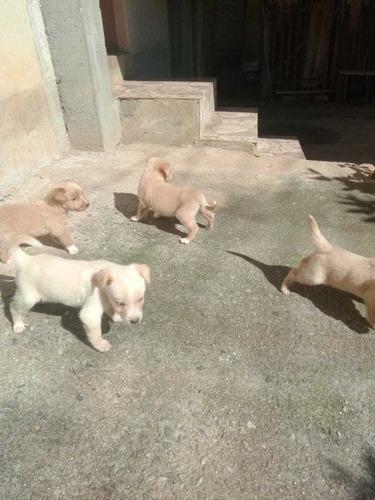 estou doando filhotes de cão