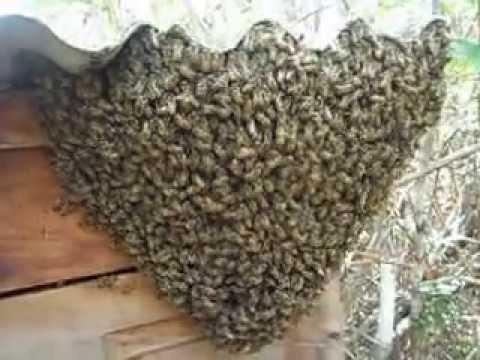 estrato ferte para captura de abelha europa e africana 200ml