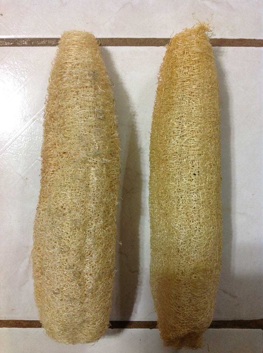 Estropajo organico natural luffa esponja vegetal 200 x - Esponja natural vegetal ...