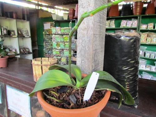 etiqueta modelo e11 para identificação de plantas - 1000 und